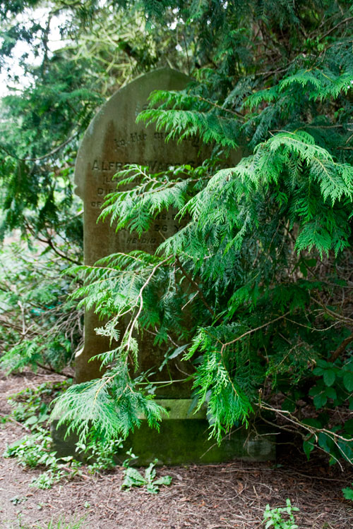 L/Cpl Salmon's headstone (right) BEFORE branches and undergrowth had been moved back.