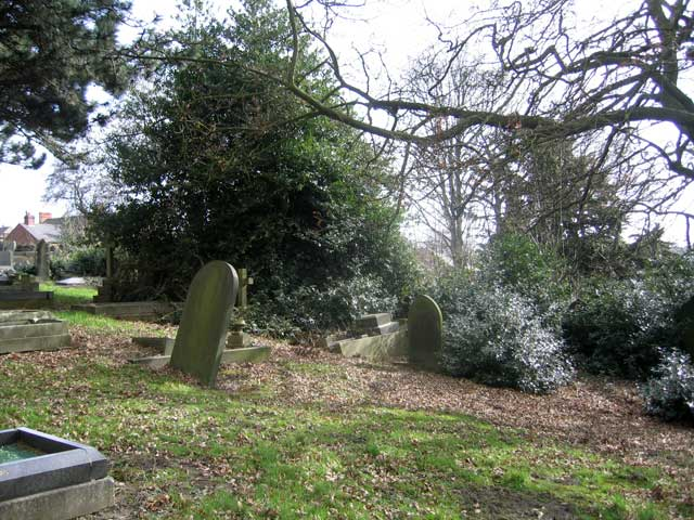 The large holly bush obscuring Private Wolstenholme's grave